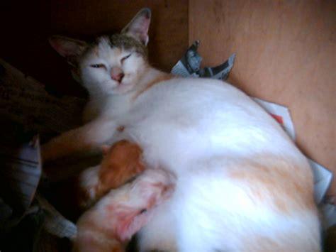 Kucing Ibu Dan Anak anak anakku tercinta fatih najwa aliff abdurrahman ihsan fathurrahman ibu kucing dan