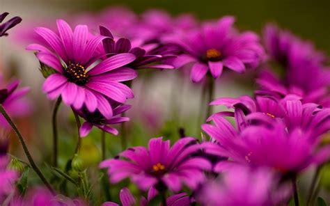 imagenes bellas wallpaper flores moradas bellas wallpaper 886850