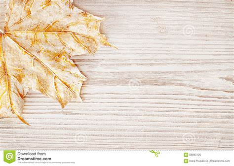 Autumn White wood background texture and leaf autumn white wooden