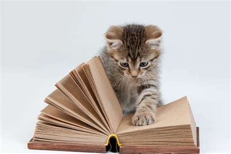 i cats books solve cats potty problems fix hit or miss litter ary mistakes