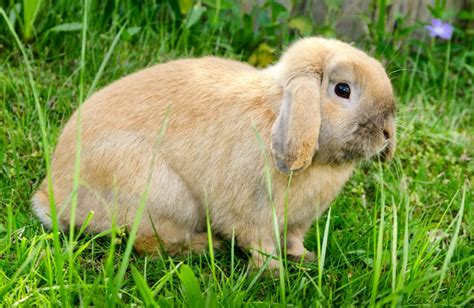 Treating Your Pet Rabbit for Fleas   Pets4Homes
