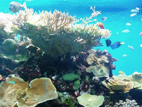 Aquarium birch aquarium