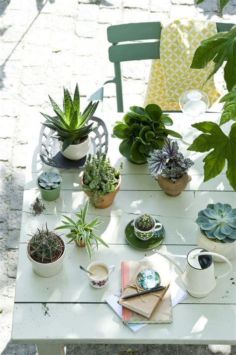 xenos hangplant mit pflanzen den sommer feiern pflanzenfreude