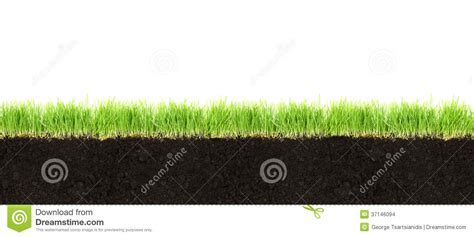 grass section cross section of soil and grass stock images image 37146094