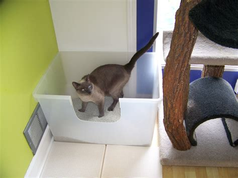cat going to bathroom outside of litter box litter boxes get the scoop what kind how many and where
