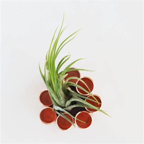 succulent holder items similar to copper terrarium copper air plant holder succulent holder table centerpiece