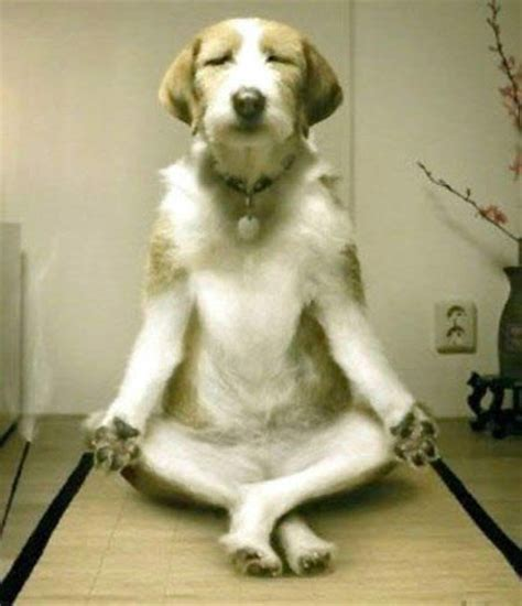 imagenes yoga animales animales haciendo yoga taringa