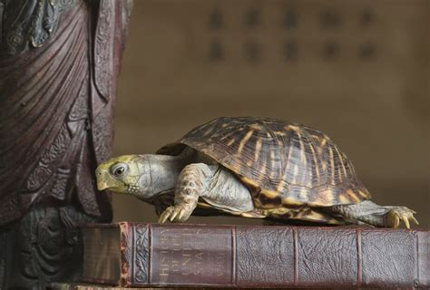 meaning   tortoise  feng shui