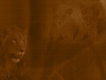 template powerpoint lion lion 05 powerpoint templates