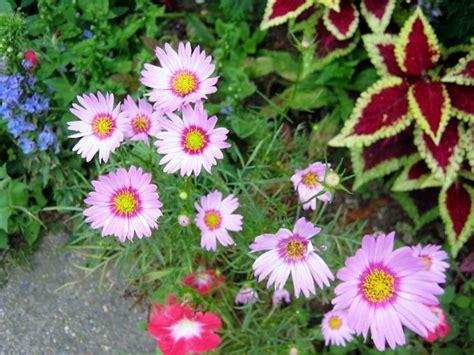 piante fiori da giardino piante da giardino con fiori fiori piante fiorite per