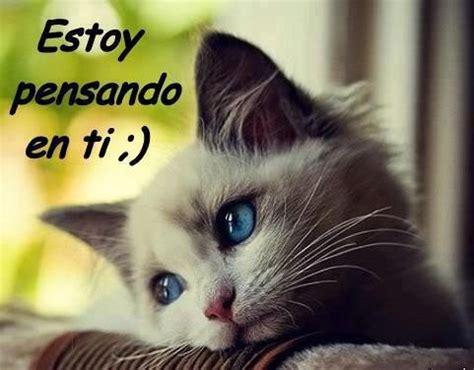 imagenes romanticas wasap gatos whatsapp imagens whatsapp