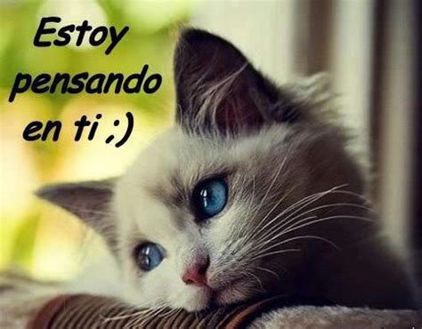 imagenes de wasap romanticas gatos whatsapp imagens whatsapp