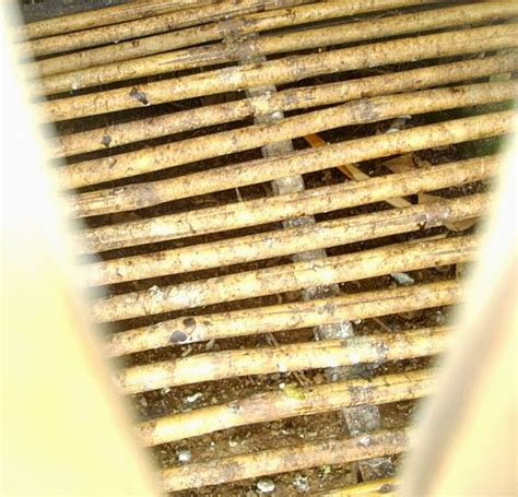 Alas Lantai Kandang Ayam itik banyuwangi sangkar ayam piaraan hias sehat hygienic