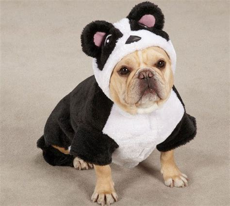pug panda costume 17 best images about mdhgsswag on poodles costumes and for dogs