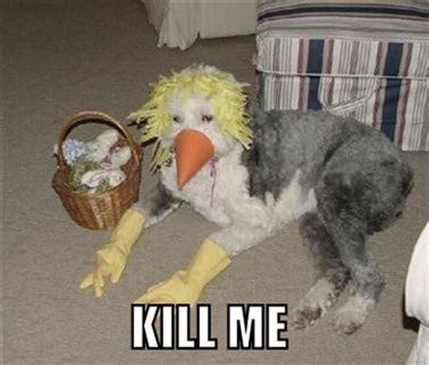 Kill Me Meme - kill me now 39 pics