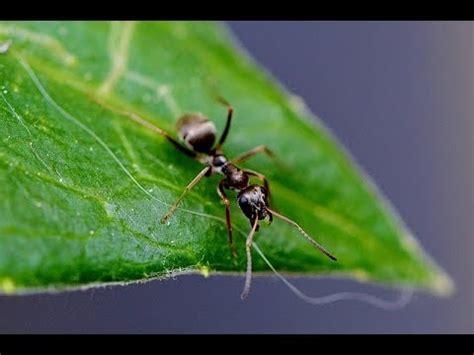 ameisen vertreiben ohne gift 3596 hausmittel gegen ameisen ohne gift zerquetschen