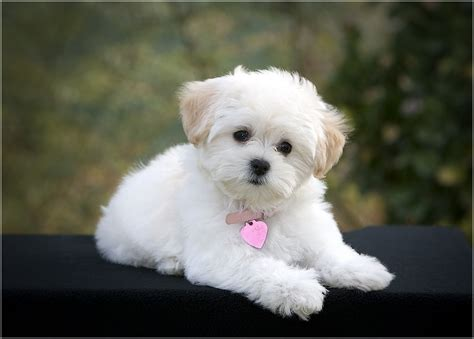 best small family dogs small family dogs breeds pet photos gallery 5d24oxyk81