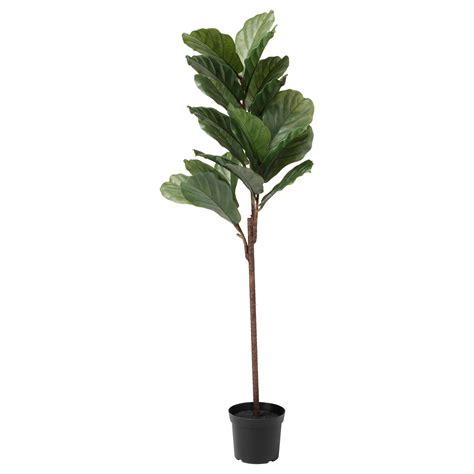 ikea leaf fejka artificial potted plant in outdoor fiddle leaf fig