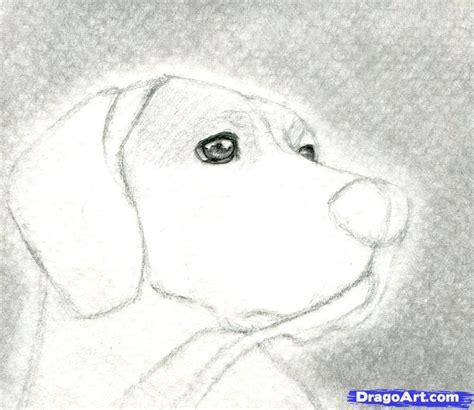 imagenes no realistas faciles como dibujar algunos animales realistas parte1 taringa