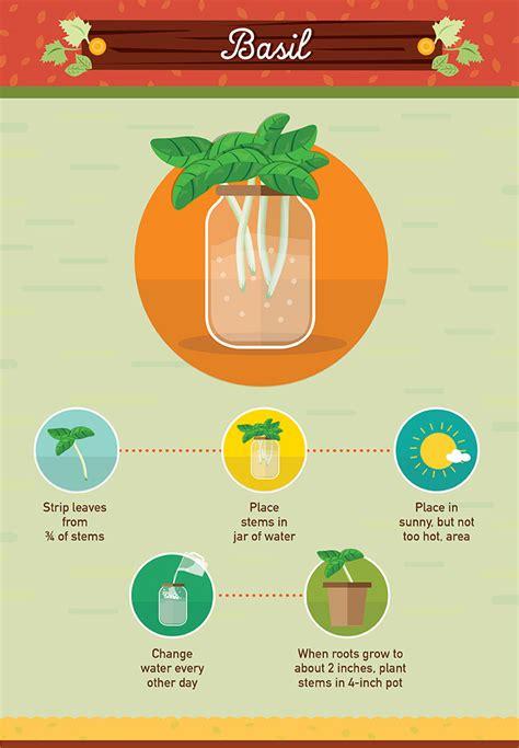 foods   regrow  scraps foodwaste