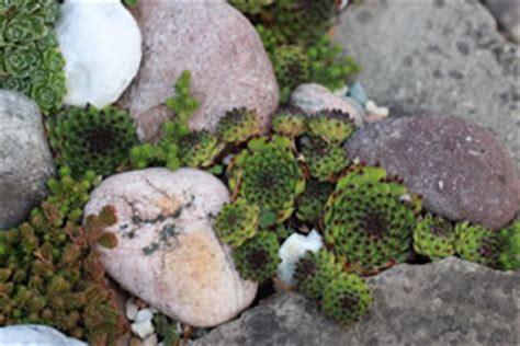 Bachlauf Richtig Bepflanzen by Steingarten Anlegen Gestaltung Und Bepflanzung