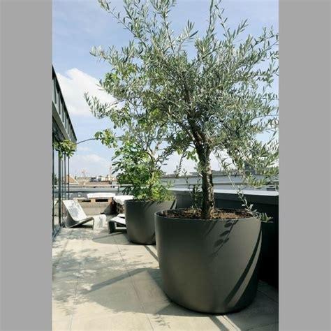 alberi da vaso per terrazzo alberi da terrazzo piante da terrazzo alberi per il