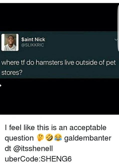 aint nick  tf  hamsters    pet stores