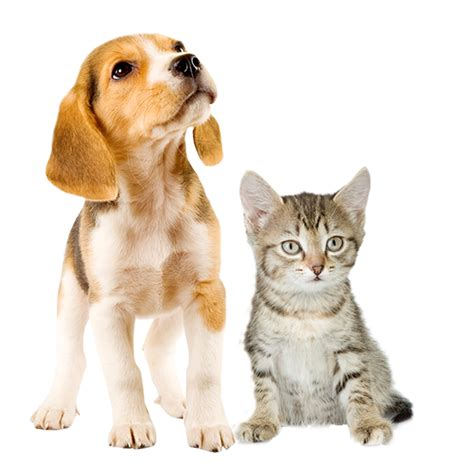 puppy health medivet uk puppy kitten healthcare