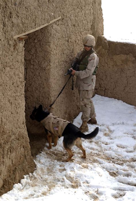 puppy in vest bulletproof vest wiki