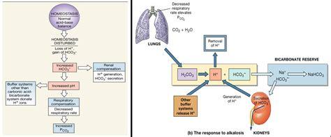 debutlyda carbonic acid buffer system formula