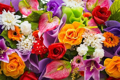 imagenes para perfil flores flores de rosas para perfil whatsapp