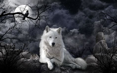 white wolf and black wolf 1600x1200 wallpapers wolf white wolf at night full hd fond d 233 cran and arri 232 re plan