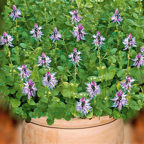 Verpiss Dich Pflanze Kaufen 3259 by Verpiss Dich Pflanze Blumen Und Pflanzen