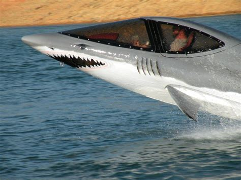 shark in boat all graphical dolphin shark jet ski
