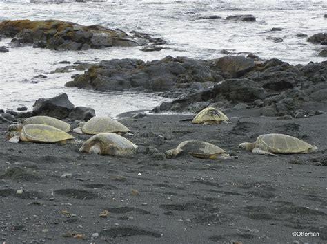 punalu u punalu u black sand beach park hawaii island hawaii