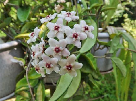 best vertical garden plants top 10 best plants for your indoor vertical garden