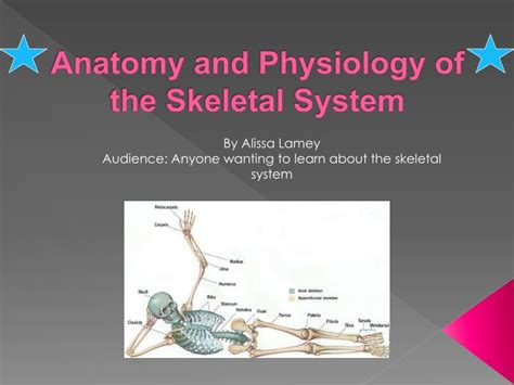 anatomy and physiology coloring book elaine marieb pdf anatomy and physiology get a pdf book