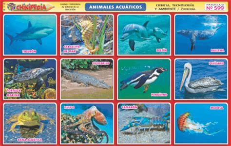 imagenes de animales marinos con sus nombres laminas de animales acuaticos imagui