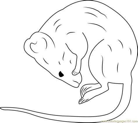 sleeping mouse coloring page another taxidermy sleeping mouse coloring page free