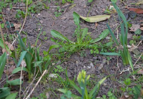 Garten Pflanzen Saurer Boden by Bodenarten Und Erde Tipps Obi F 252 R Guten Gartenboden