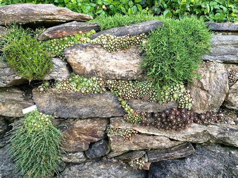 Succulent And Moss Planted Rock Wall Garden At Wave Hill Rock Garden Wall