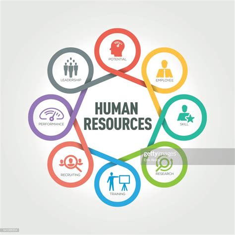 Human Resources human resources infographic with 8 steps parts options