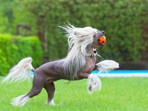 dogs that look like horses top 10 equestrian dogs that look like horses