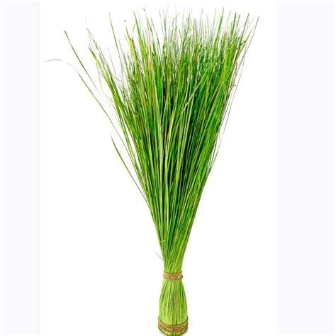 grömitz wohnung kaufen dekogras h 105 cm grasdeko gras grasb 252 schel naturgras