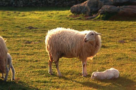 fotos animales mamiferos c 243 mo son los mam 237 feros los animales mam 237 feros