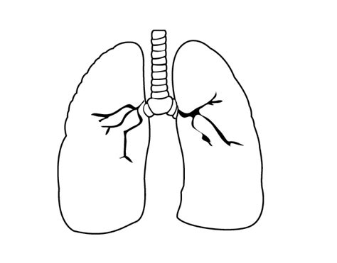 coloring pages of heart and lungs free heart lungs coloring pages