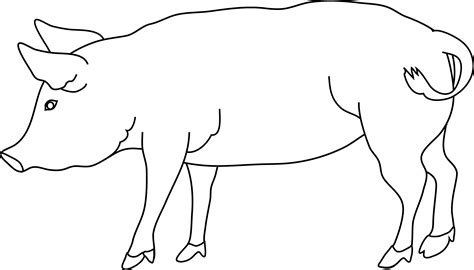 Outline Of A Pig Cliparts Co The Pig Coloring Pages