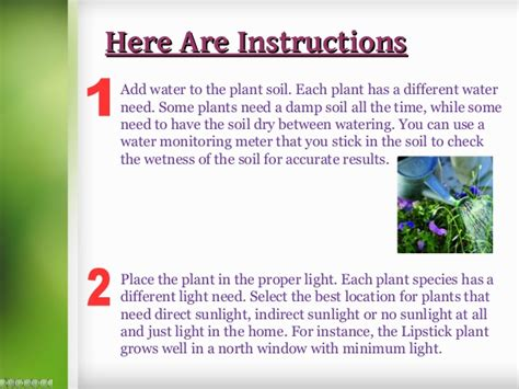 how to take care of plant plants galore uk