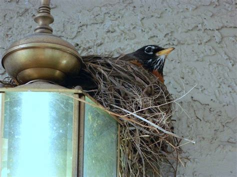 how to prevent birds from building their nests on your
