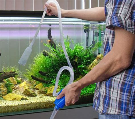 Pakan Ikan Hias Di Akuarium cara memelihara ikan hias di akuarium bibitbunga